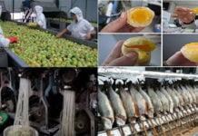 Еда из Китая наполненная пластиком