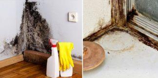 Как избавиться от плесени в доме