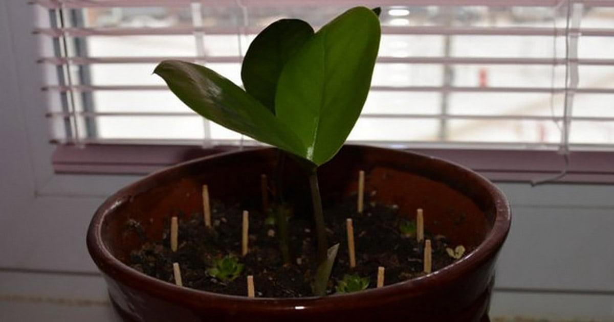 Картинки по запросу Обычные спички могут спасти умирающее растение!