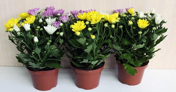 9 растений для очищения воздуха