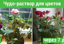 Раствор для растений