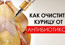 как очистить курицу от антибиотиков
